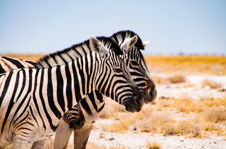 YG_Namibia-881.jpg