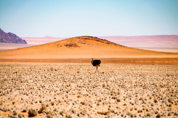 YG_Namibia-69.jpg