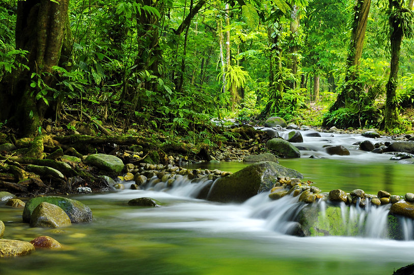 Mountain stream in a forest.jpg