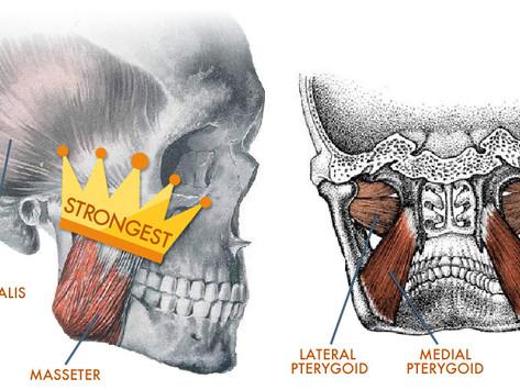 Mastication: A Closer Look