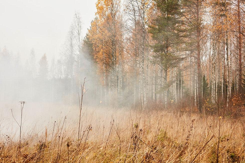 HANRO_fall_winter_2019_medium_Trend_192_