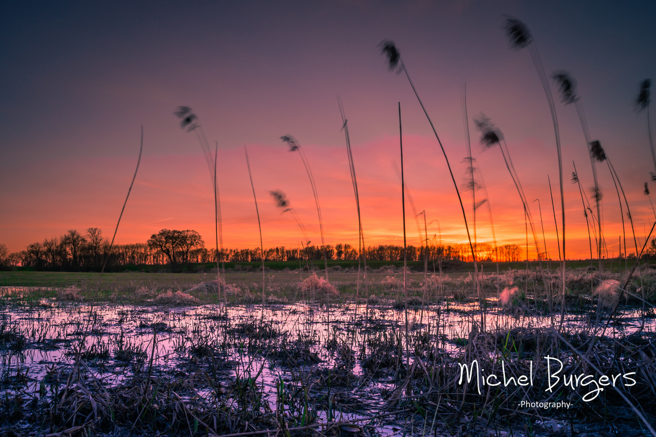 Waving reed