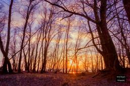 Gouden uurtje in het bos