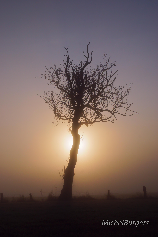 Death tree wm