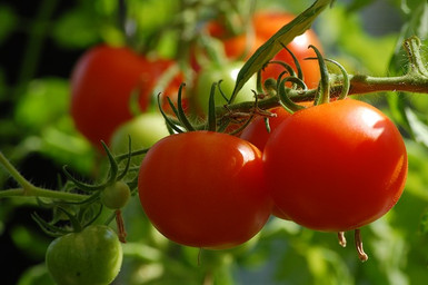 tomato-2643774_640.jpg