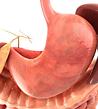 DigestiveSystem.png