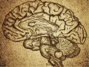 Brain Lesion.png