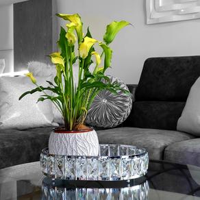 Importancia de las plantas en el hogar