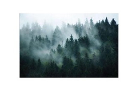 Glass bilde FOREST - 90x150cm