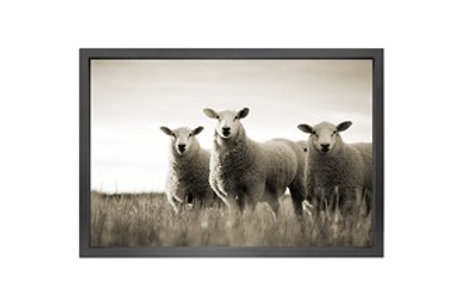 Canvas Bilde -SHEEP