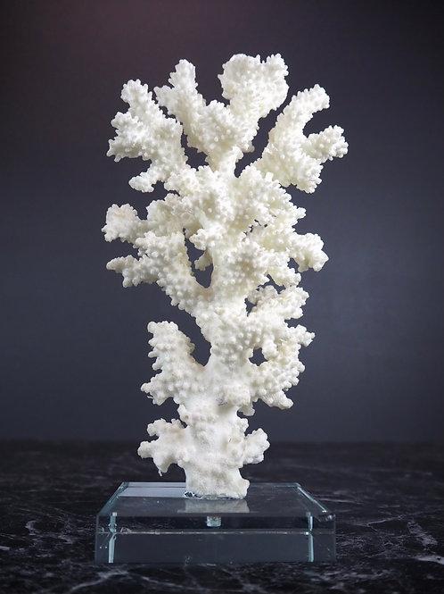 Coral  - 26cm