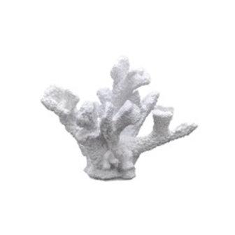 Korall hvit liten