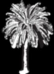 Palmier cote d'azur-01.png