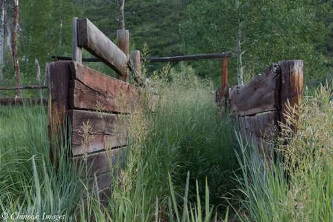 Cattle Chute, WRNF.jpg