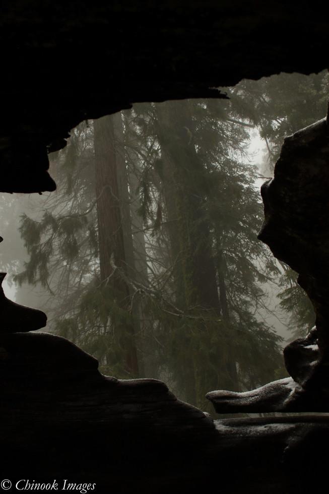 Through the Lens of a Fallen Giant