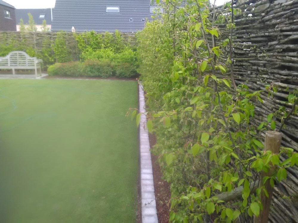 hedge-2903846_1920.jpg