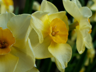 Daffodil Photography Competition Results