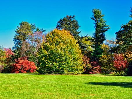 樹木葬の理想と現実