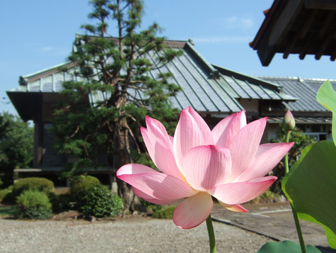 静岡県三島市の寺院(賛助会員)*生前予約も可能です