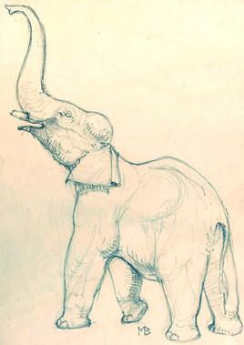 Éléphant trompe en l'air