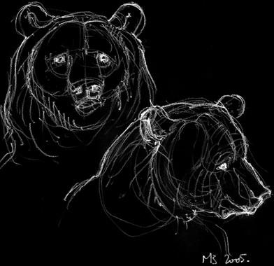 Négatif têtes d'ours