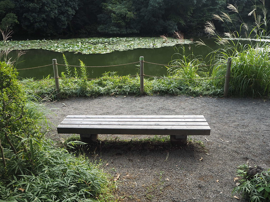 Meiji Shrine In Tokyo, Japan lily lotus pond bench