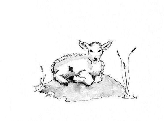 Lamb on Rock