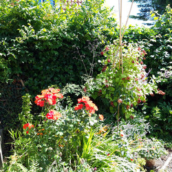 8. De tuin van Jacqueline, Kortlandstraat 46