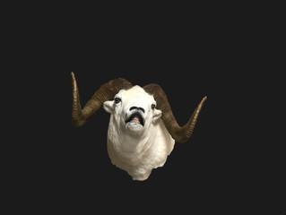 Fleming Dall Sheep mount