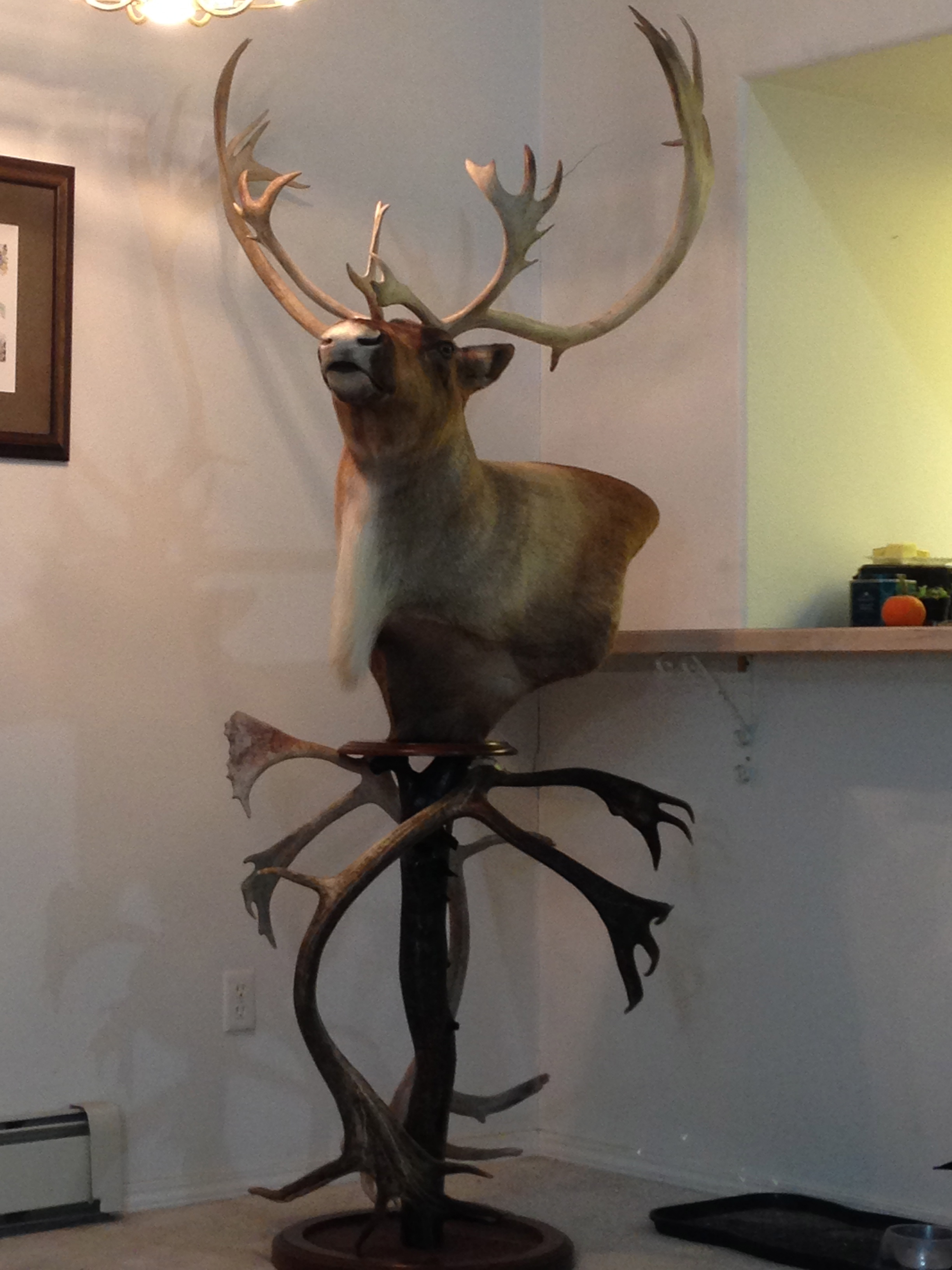 Caribou pedestal in a customers home