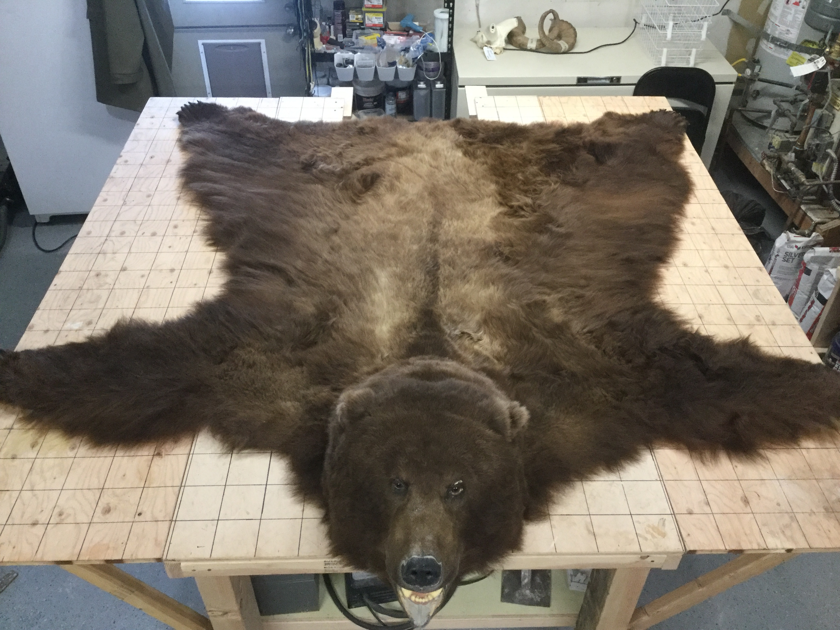 Monster Unimak bear rug