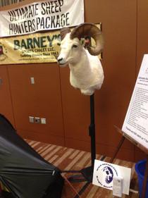 Sheep shoulder mount WSF banquet