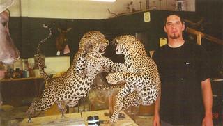 Fighting Leopard mount