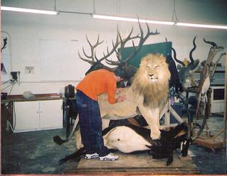 Detailing Lion on Sable