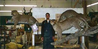 Leopards!