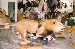 Running Lion mount