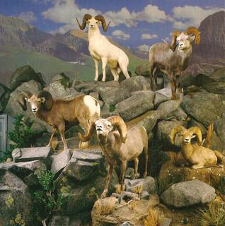 Mountain of Sheep