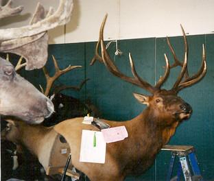 Elk pedestal mount
