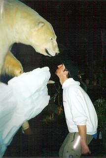Polar Bear mount