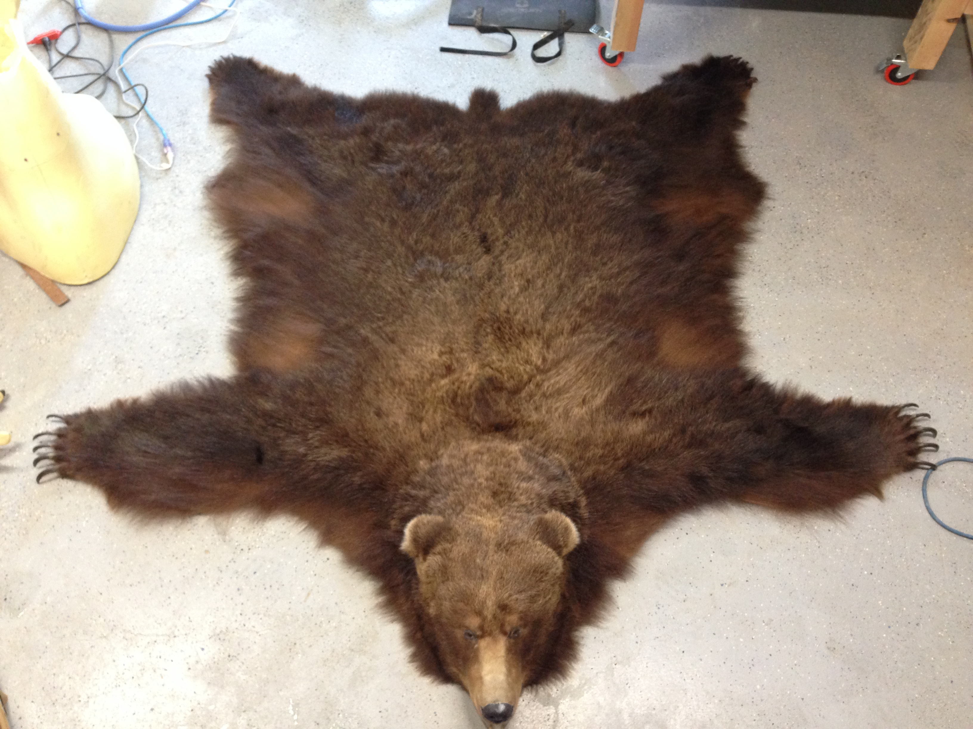 Brown Bear rug fresh off the table.