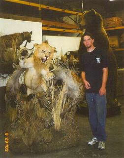 Lion fighting Hyena mount