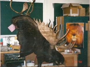 Drinking Moose pedestal mount