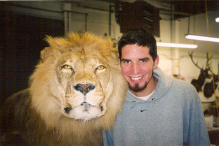 African Lion mount