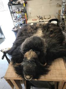 Musk Ox Rug