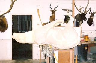 Sculpting a running Lion