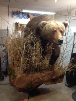 Finished 1/2 life size bear.
