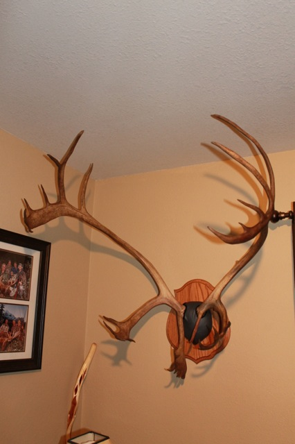 Finished caribou panel mount