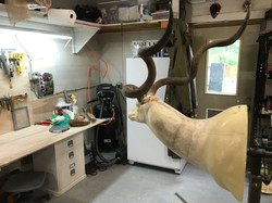 Kudu sculpting