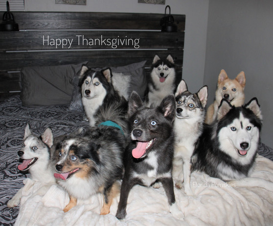 Our Pack