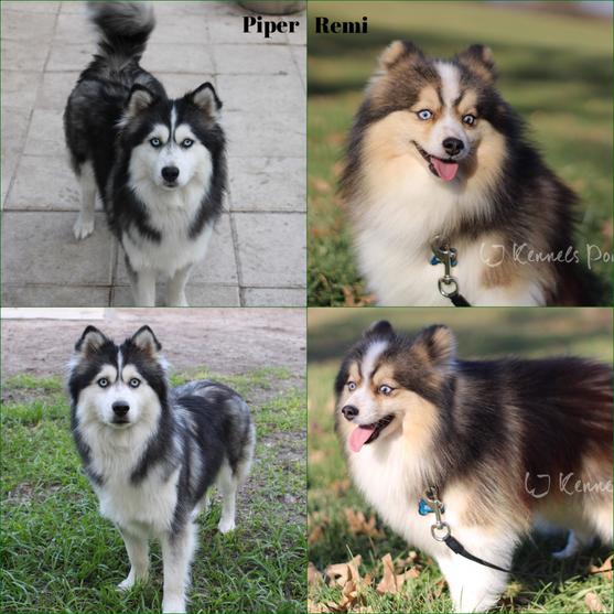 Piper/Remi